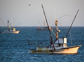 Salmon fishing in bodega bay the official bodega bay for Salmon fishing bay area
