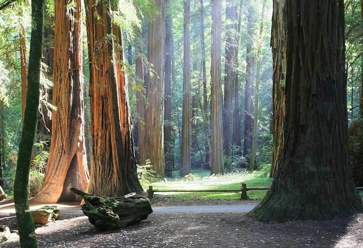 Is Redwood National Park Dog Friendly