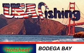 bodegabayfishingreport