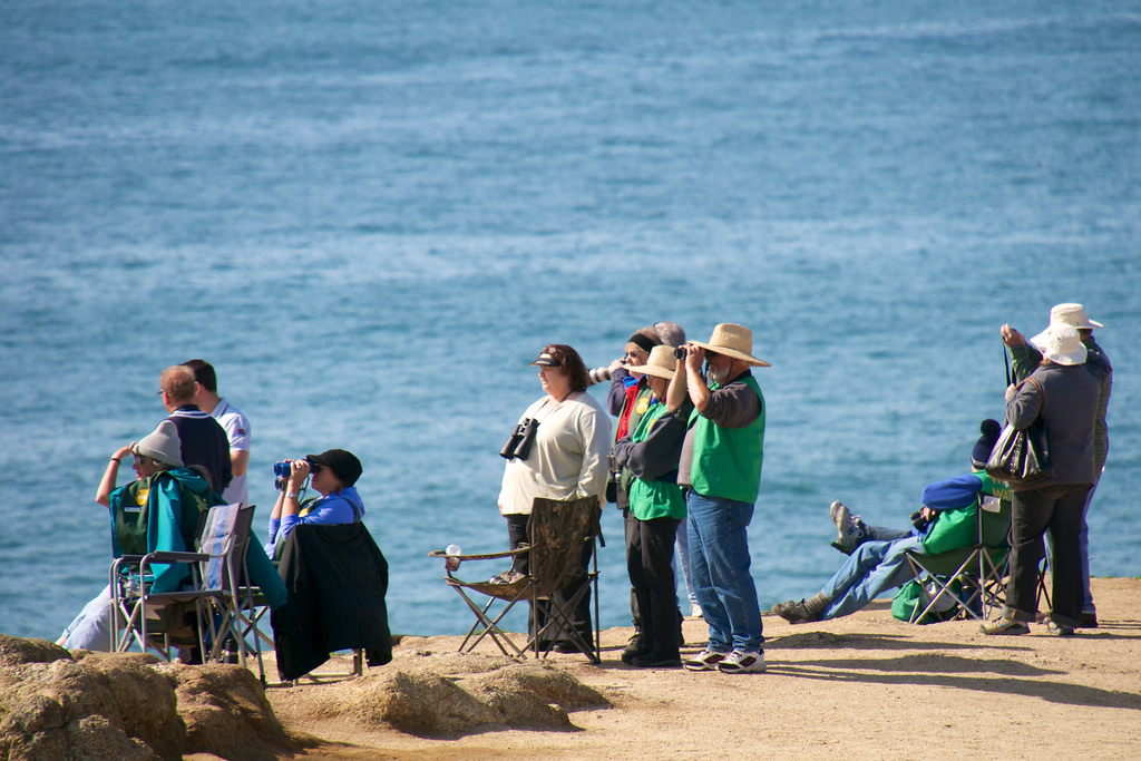 Bodega bay area visitor info weather whale migration for Bodega bay fishing reports