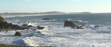 Coming Home to Bodega Bay