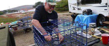 Dungeness crab season opens for sport fishermen