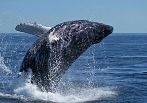 whale_watching290